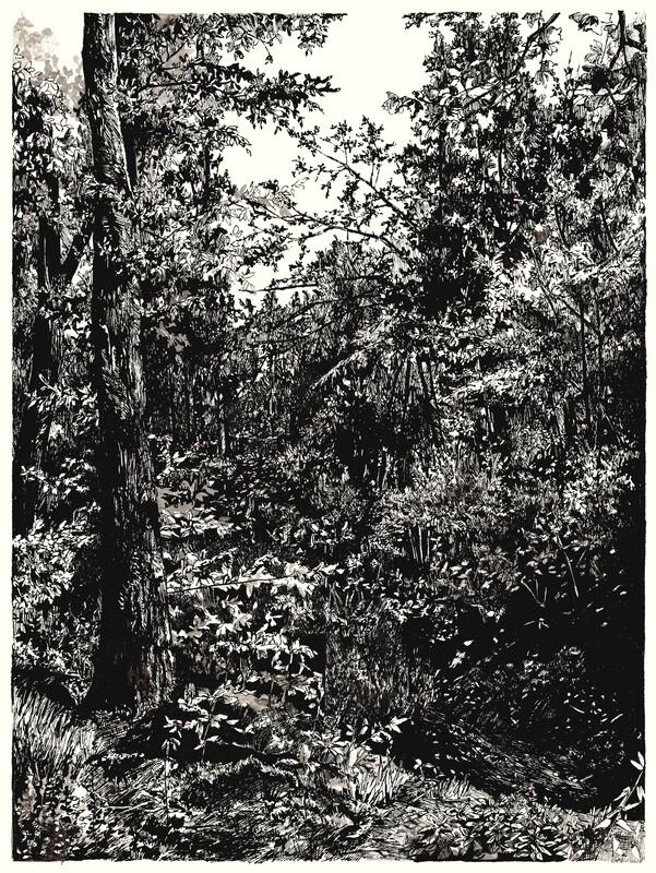 forest 1- welwyn