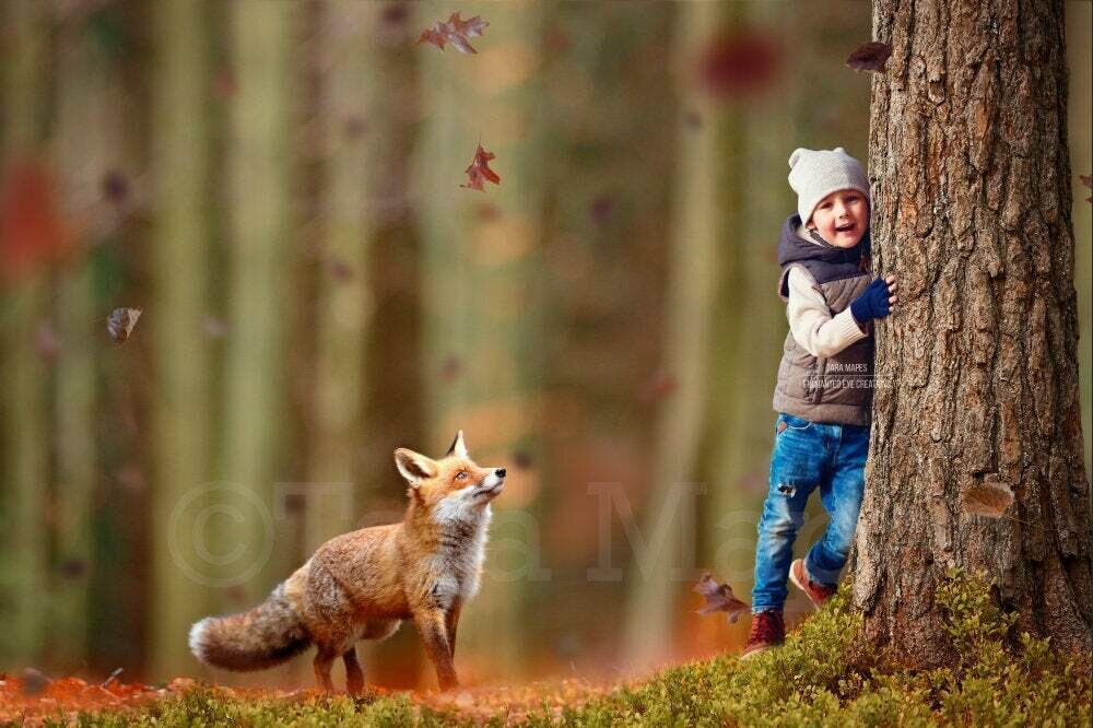 Fox by Tree in Forest Autumn Fall Leaves Digital Background Backdrop