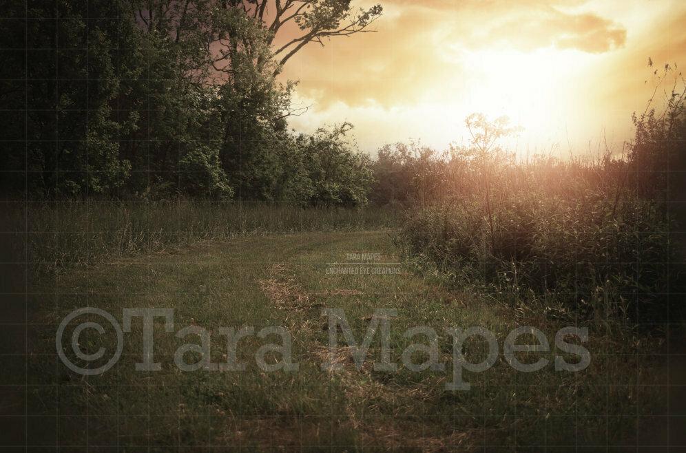 Sunset Grassy Path Magic Background Backdrop
