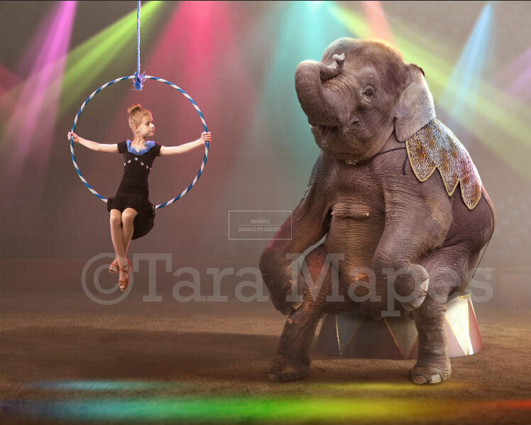 Baby Circus Elephant on Stage in Circus Ring Digital Background