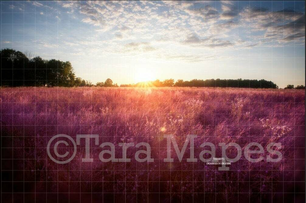 Sunset Field - Lavender - Purple Field - Creamy Nature Background Backdrop