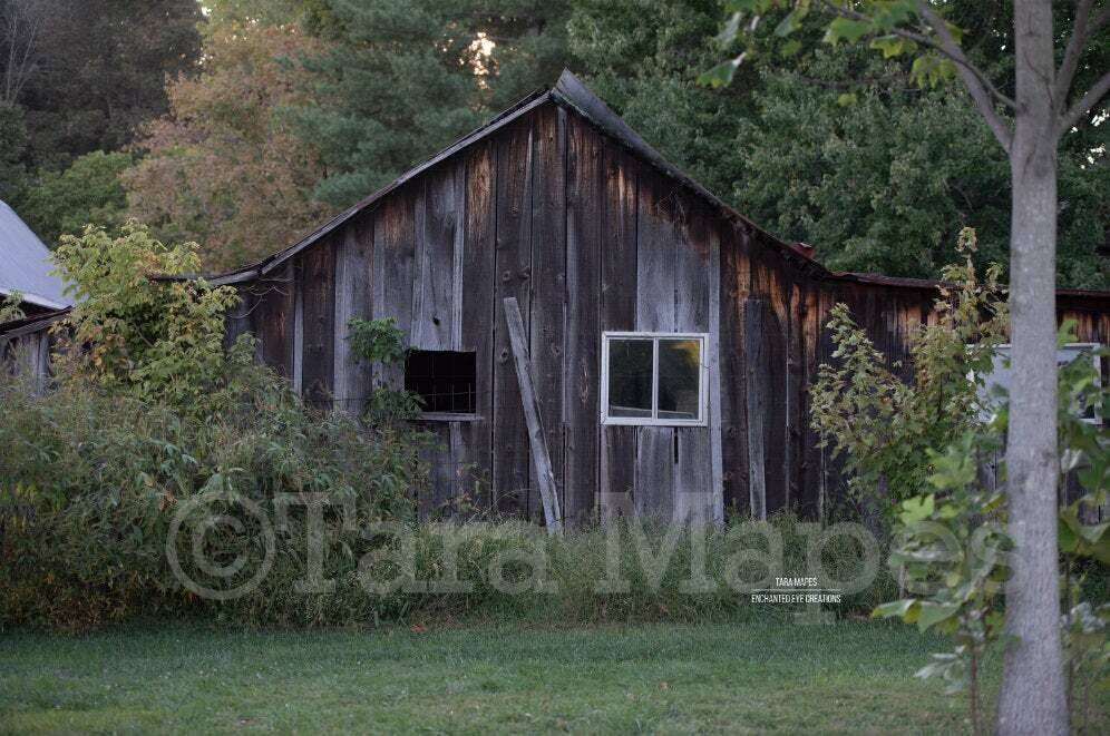 Old Cabin - Abandoned House - Scary Haunted House -  Nature Digital Background Backdrop