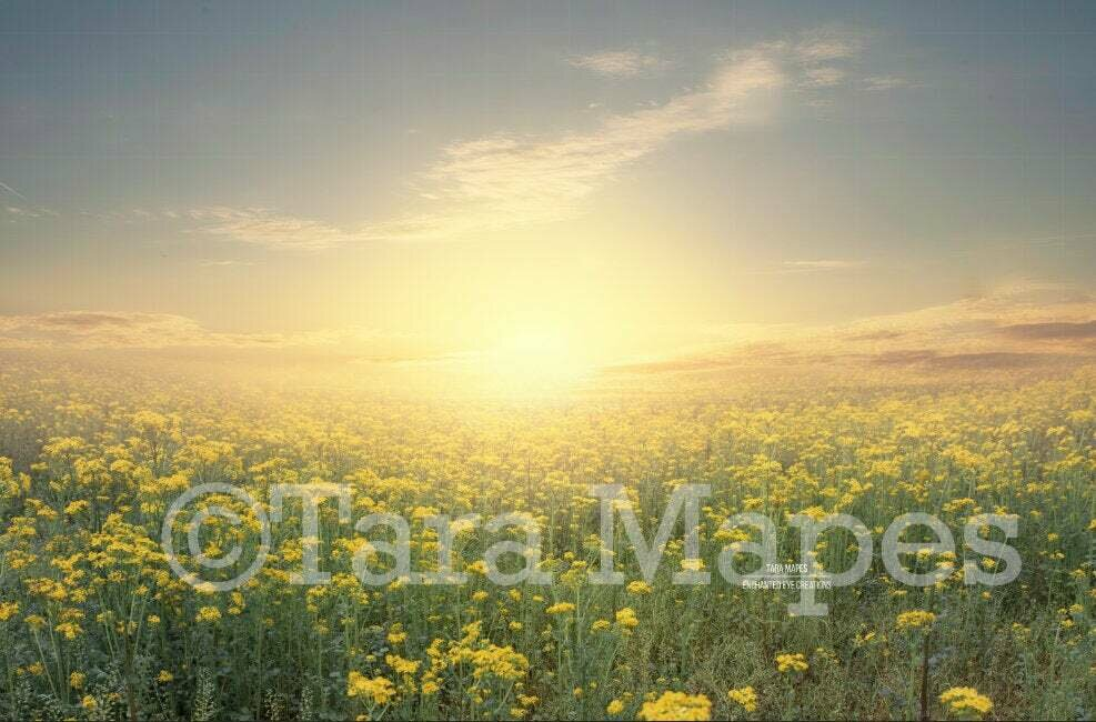 Sunset in Field Creamy Nature Background Backdrop