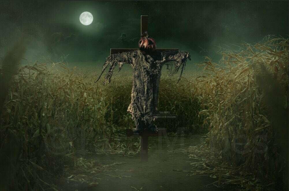 Scarecrow in Cornfield Cornstalks Halloween Digital Background Backdrop