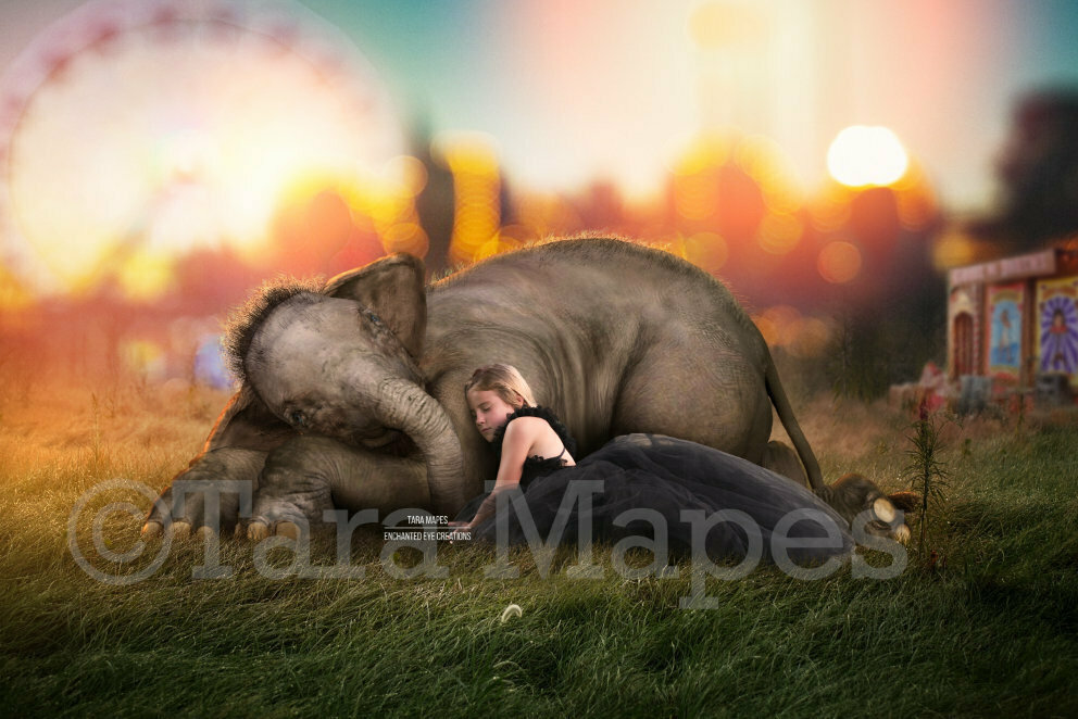 Elephant Baby at Circus - Baby Elephant Laying Sleeping on Fairgrounds - in Field - Digital Background / Backdrop