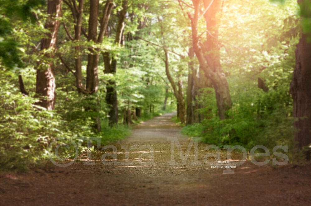 Forest Path, Dirt Path Nature Digital Background Backdrop