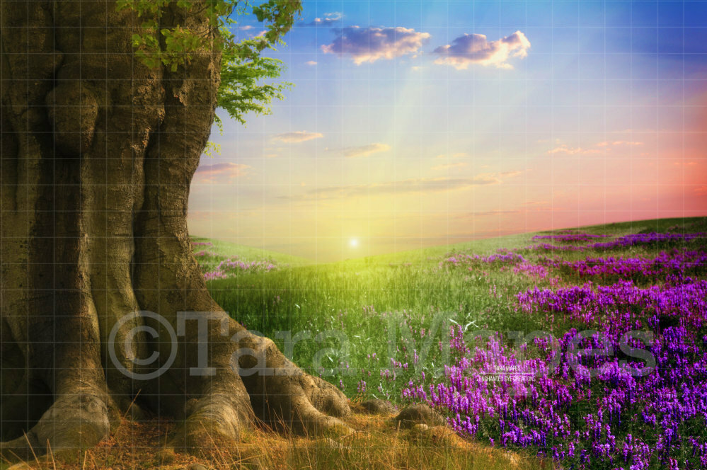 Summer Tree in Field Creamy Nature Digital Background Backdrop
