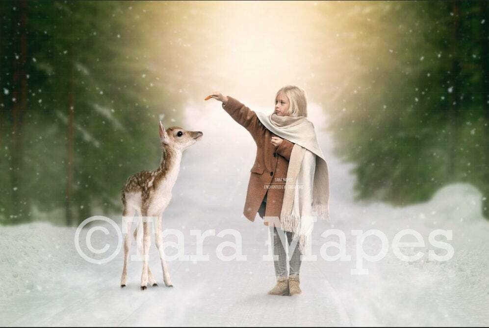 Baby Deer in Snowy Forest  - Path - Snowy Road Winter Digital Background Backdrop