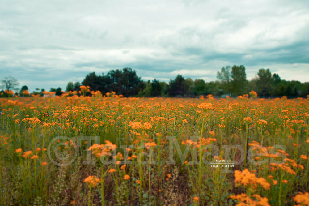 Field of Orange Flowers in Country Nature Digital Background Backdrop