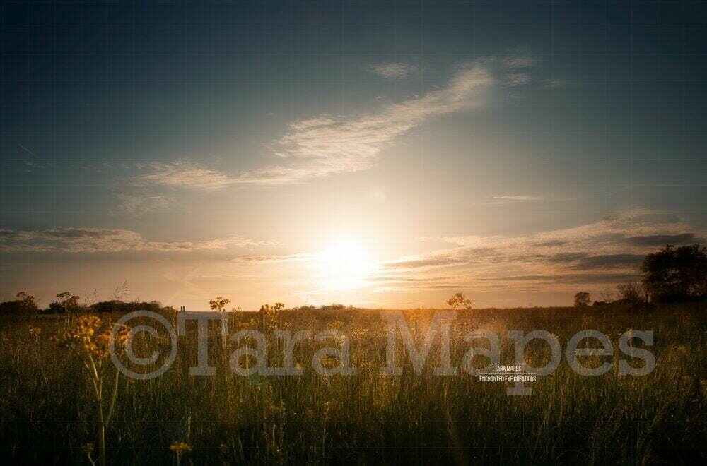 Sunset Field Creamy Nature Background Backdrop