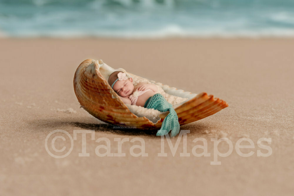 Shell on Beach - Mermaid Scene or Newborn Scene Digital Background Backdrop Tail Version Included TWO PACK