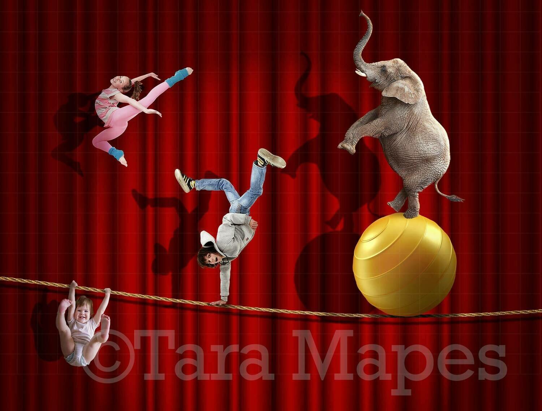 Circus Elephant Tightrope Digital Background