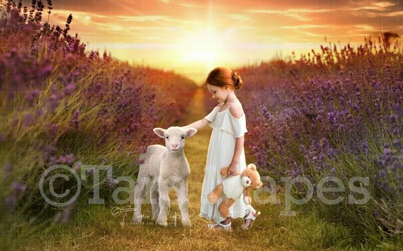 Baby Lamb in Lavender Field Spring Easter Digital Background Backdrop