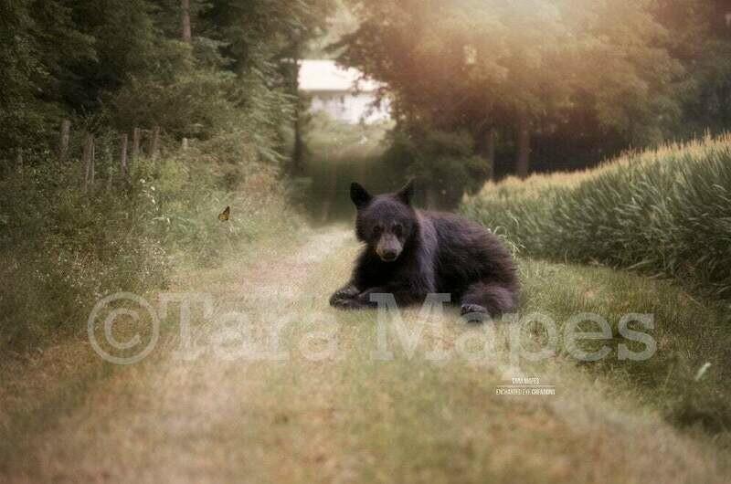 Bear on Farm Drive - Country Bear on Path - Baby Bear Digital Background Backdrop