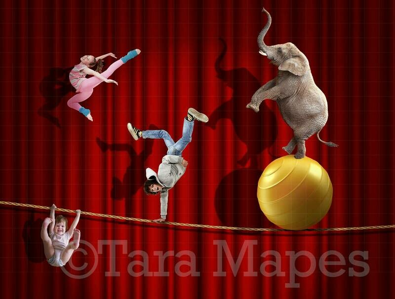 Circus Elephant Tightrope Digital Background
