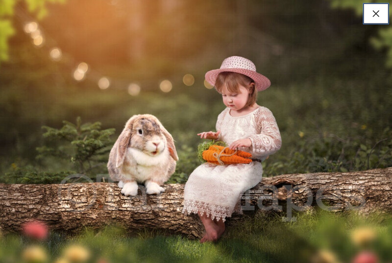 Easter Bunny in Forest on Log - White Rabbit in creamy forest - Log in Forest Digital Background / Backdrop
