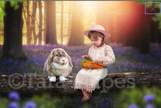 Easter Bunny in Bluebell Forest on Log - White Rabbit in creamy forest - Log in Forest Digital Background / Backdrop