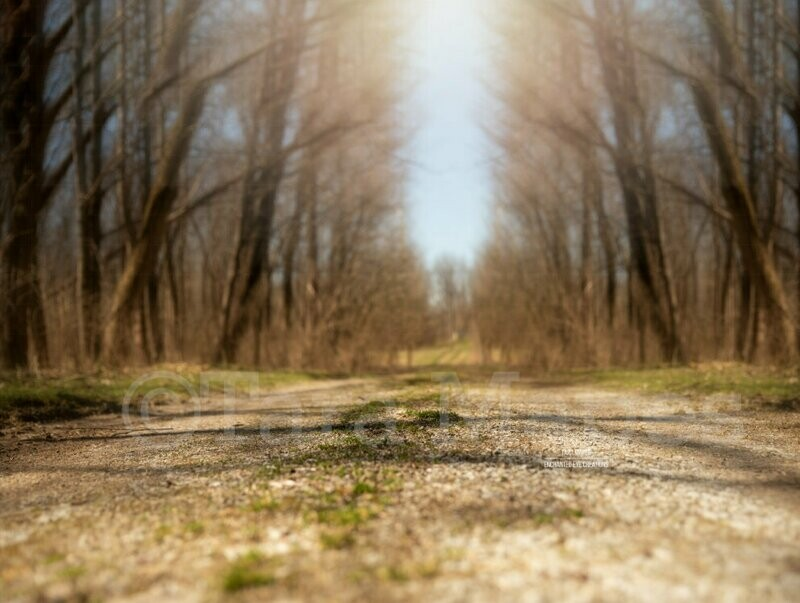 Creamy Dirt Path - Path in Forest Spring Digital Background Backdrop