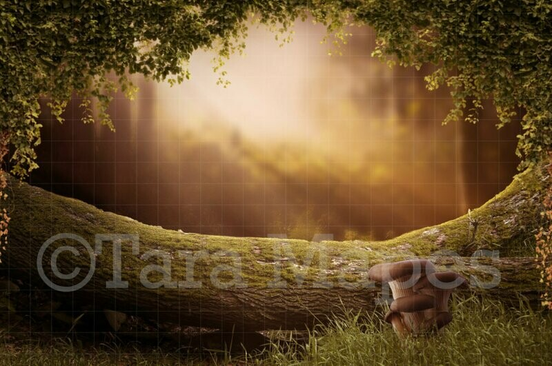 Fairy Log in Magic Forest Creamy Sunset Digital Background