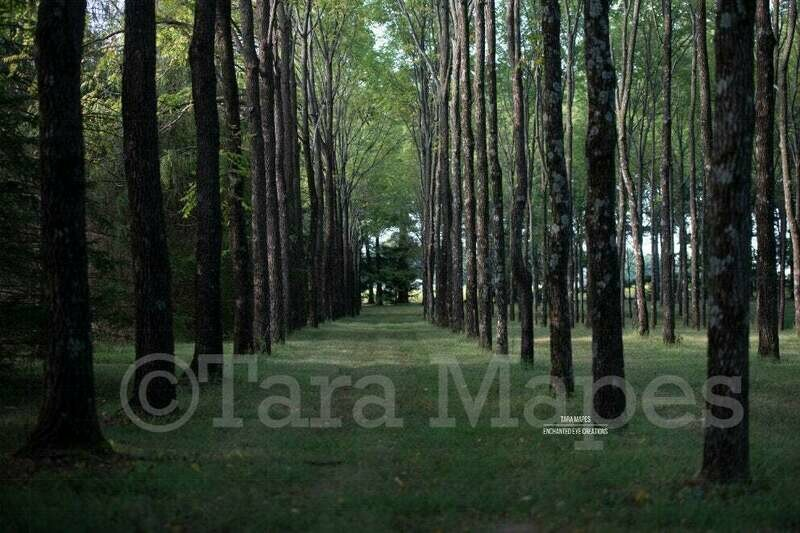 Enchanted Forest 2 Pack- Rows of Trees - Magical Woods -  Nature Digital Background Backdrop