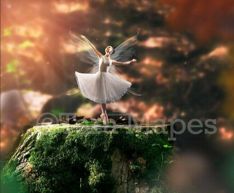 Fairy Stump  in Creamy Rich Forest Digital Background / Backdrop