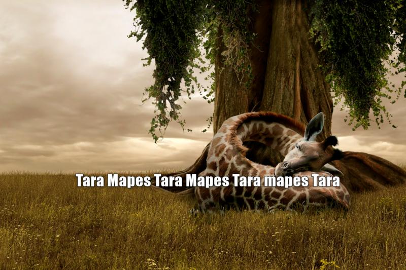 Sleeping Giraffe by Tree Digital Background