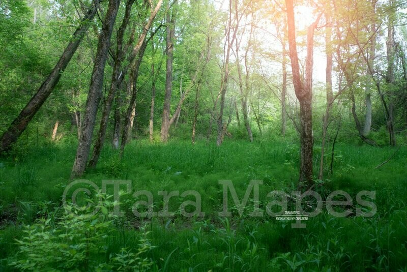 Forest Clearing, Fairy Place Magic Nature Digital Background Backdrop