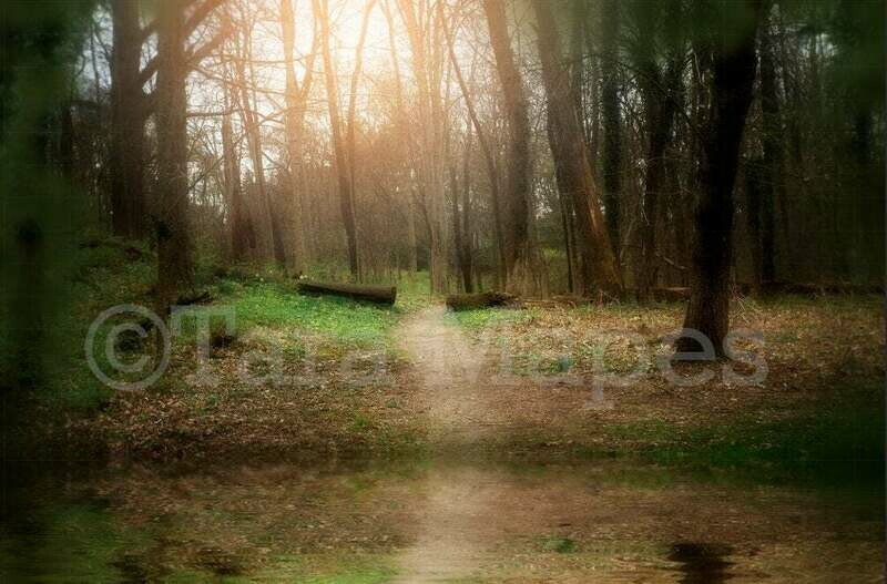 Magic Forest Path by Lake - Path in Forest Spring Digital Background Backdrop