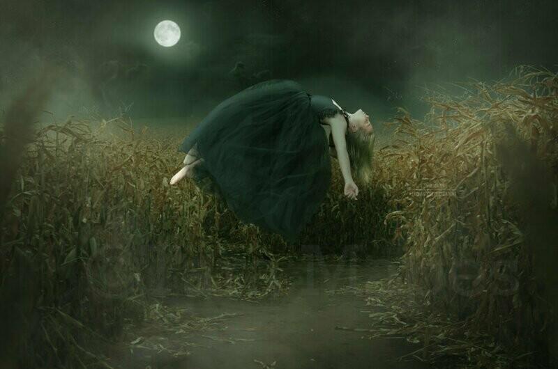 Halloween Levitation Cornfield Haunted Cornstalk Digital Background Backdrop