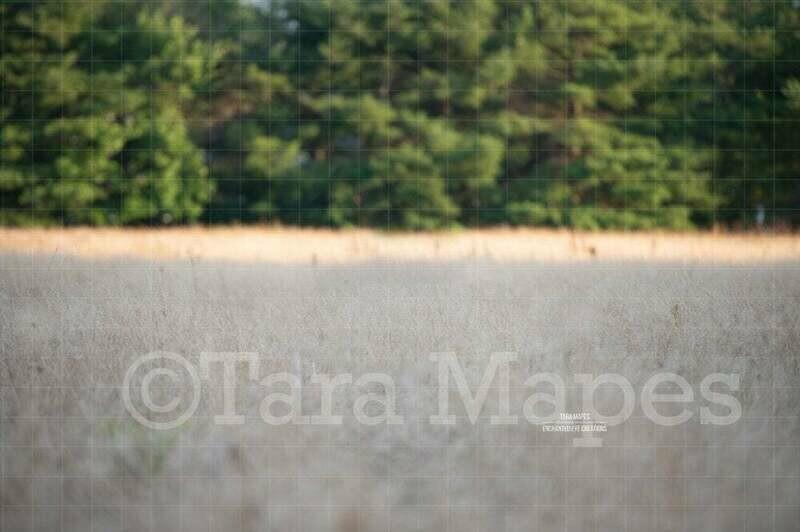 Grassy Field - Wheat Field - White Field Landscape Digital Background / Backdrop