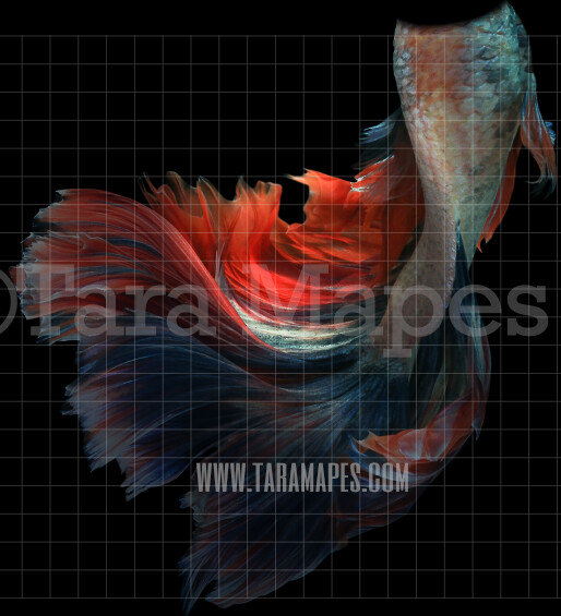 Realistic Mermaid Tail  - PNG  overlay - Transparent Background