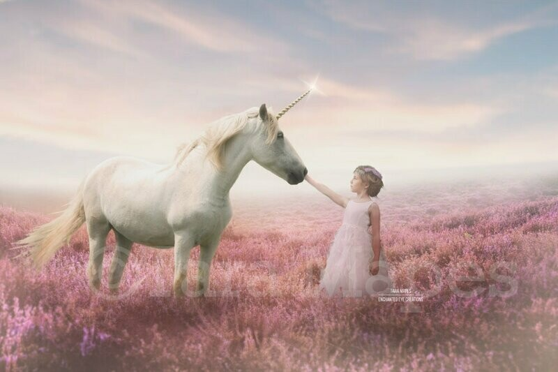 Unicorn in Field of Heather Violet Flowers with Sun Creamy Digital Background Backdrop