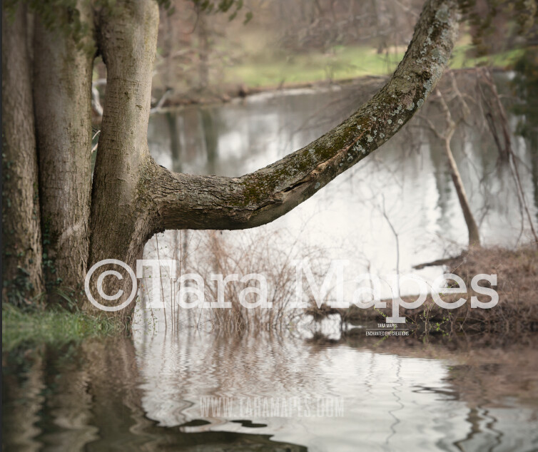 Old Tree Branch Over Lake - Old Enchanted Tree by Lake - Old Magic Tree by Pond - Digital Background by Tara Mapes