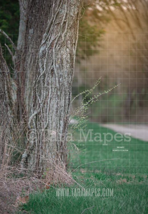 Tree by Dirt Road - Tree by Path - Digital Background Backdrop