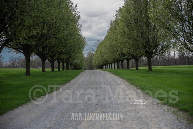 Gravel Path Landscape $1 Digital Background Backdrop by Tara Mapes