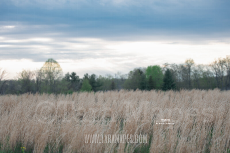 Spring Field  $1 Digital Background Backdrop by Tara Mapes