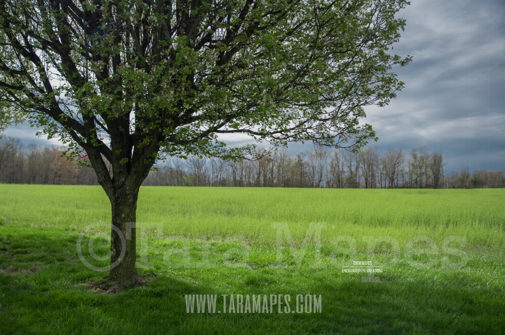 Spring Tree $1 Digital Background Backdrop by Tara Mapes