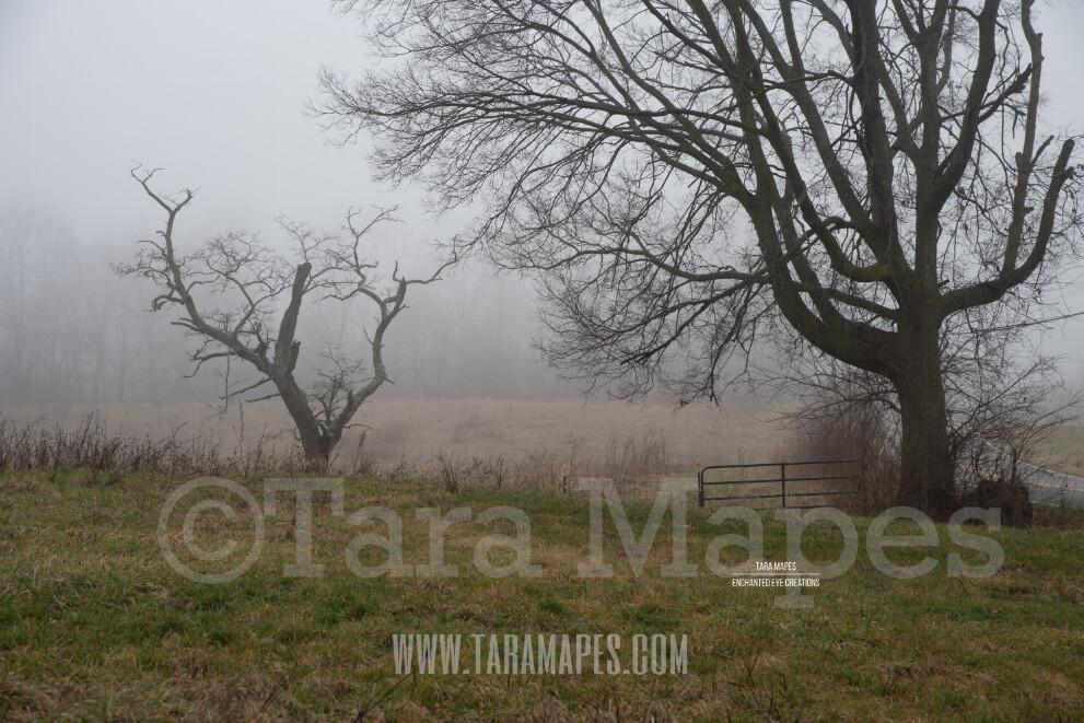 Foggy Tree 3 $1 Digital Background Backdrop