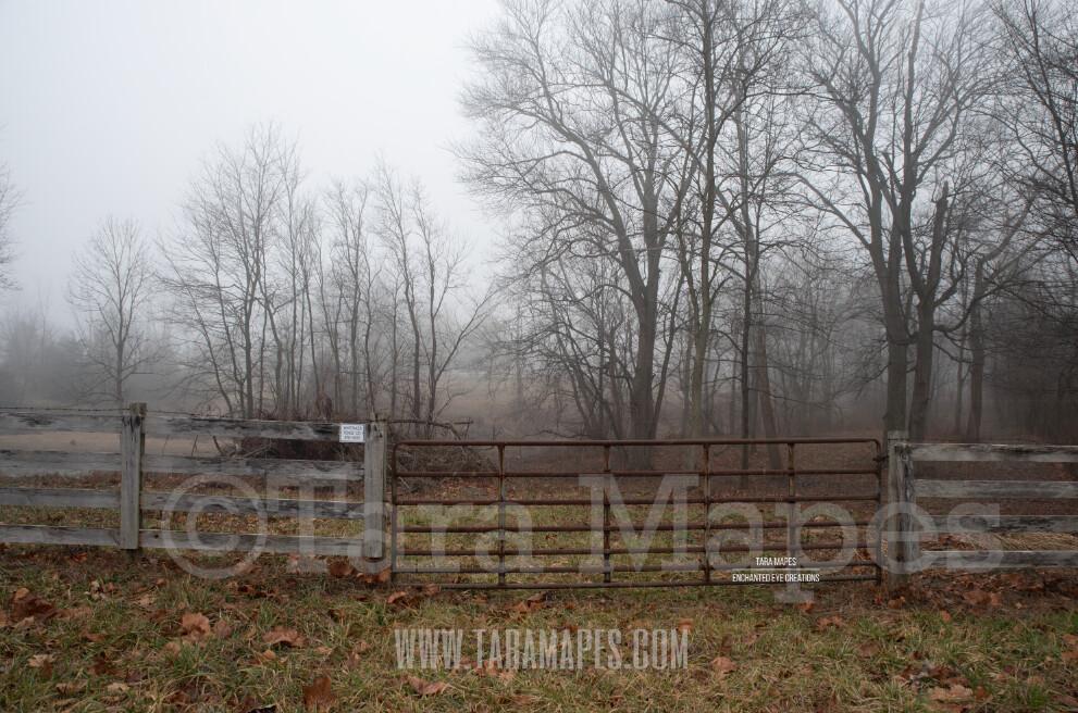 Foggy Woods 1 $1 Digital Background Backdrop