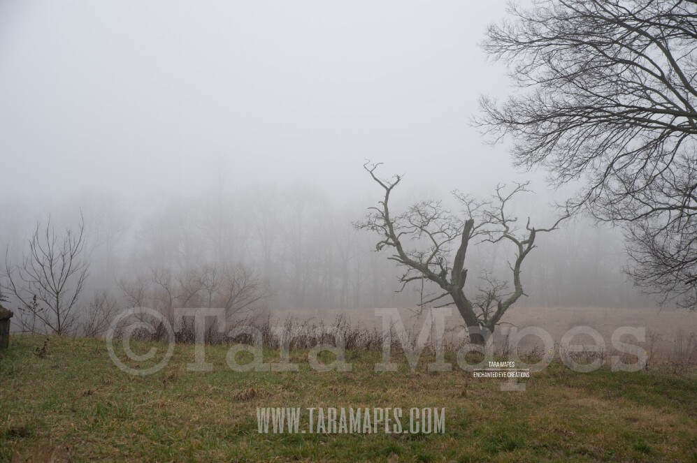 Foggy Tree 2 $1 Digital Background Backdrop