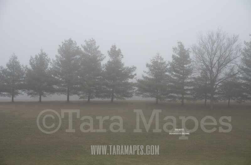 Foggy Green Pines 2 $1 Digital Background Backdrop