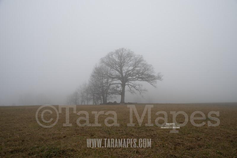Foggy Trees 5 $1 Digital Background Backdrop