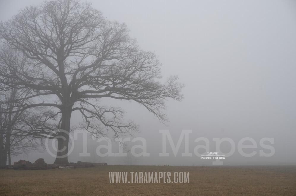 Foggy Trees 7 $1 Digital Background Backdrop