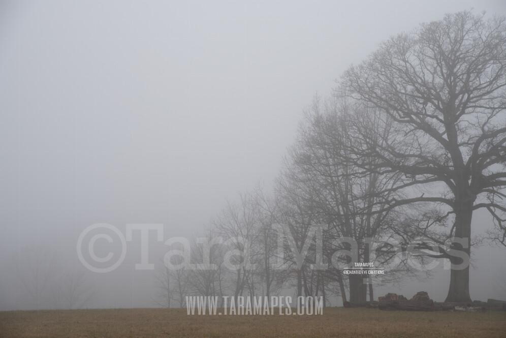Foggy Trees 6 $1 Digital Background Backdrop
