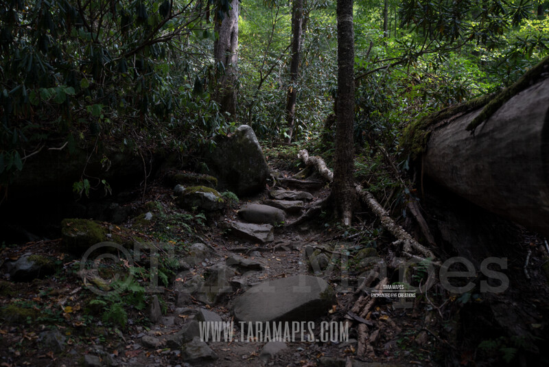 Rock Path in Forest $1 Digital Background Backdrop