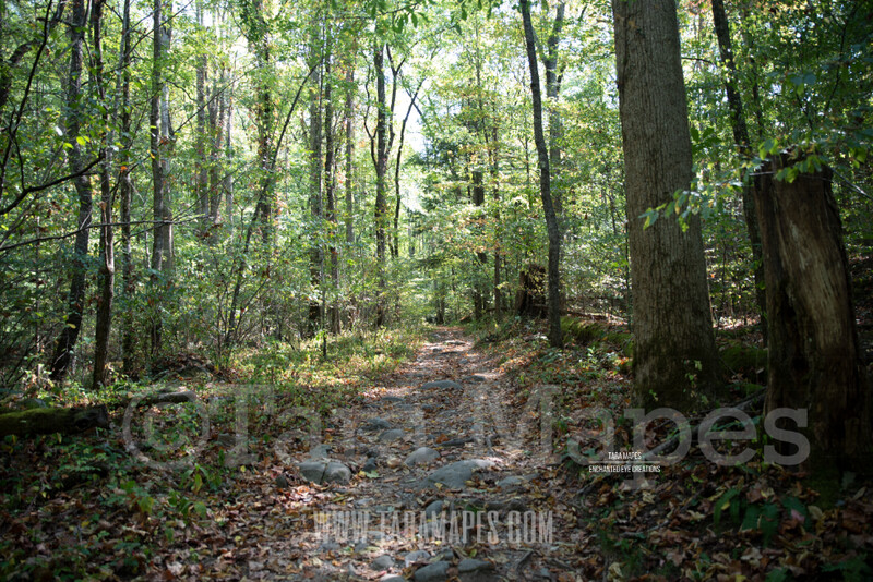 Forest Path 3 $1 Digital Background Backdrop