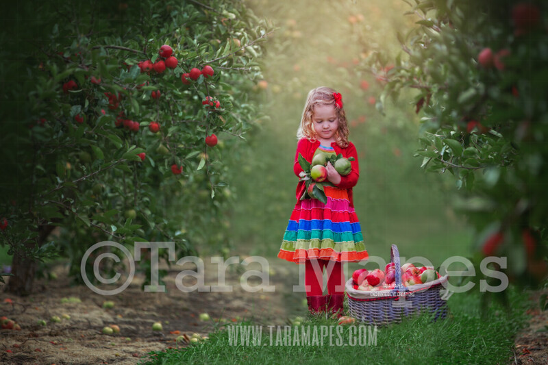 Apple Orchard - Spring Background - Creamy Background Apple Picking -  Digital Background / Backdrop