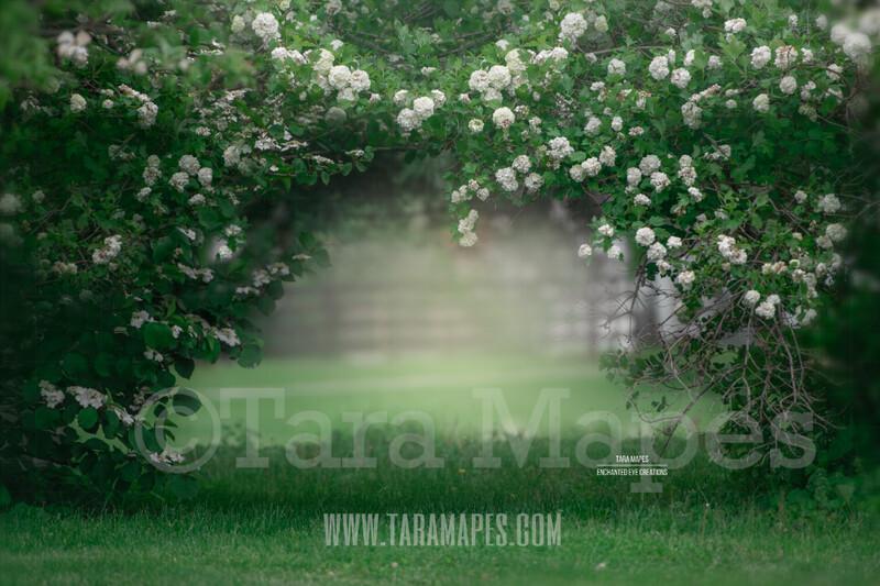 Magnolia Bush Arch - Floral Arch - Blossoming Bush - Spring Background - Creamy Background Flowering Bush  -  Digital Background / Backdrop