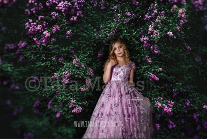 Lilac Bush - Purple Flowering Bush - Lilac Digital Background / Backdrop