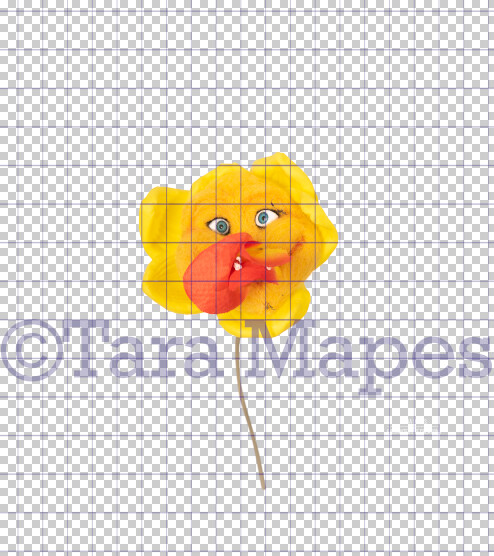 Talking Flower-  Yellow and Orange Trump Flower with Face- Flower Overlay by Tara Mapes - Alice in Wonderland Inspired PNG - Digital Overlays by Tara Mapes Enchanted Eye Creations